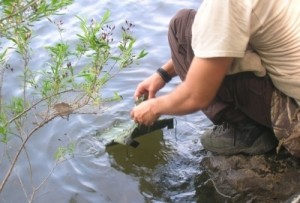 Pollution Agents in Your Water and How to Test It